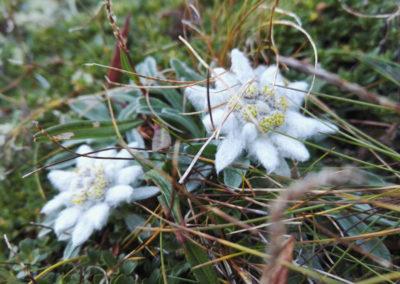 edelweiss-lucknerhuette-x